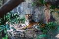 Masowe wymieranie ssaków przyspiesza