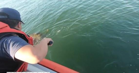Amerykańska straż przybrzeżna z New Jersey pomogła uratować żółwia morskiego zaplątanego w linę. Ratownicy pochwycili gada za pomocą siatki i pomogli mu się oswobodzić. Uwolniony żółw wypłynął na pełne morze.W akcji brali udział również ekolodzy z organizacji zajmującej się walką z zagrożeniem uduszeniem się zwierząt morskich przez fragmenty siatek rybackich i plastikowe śmieci.