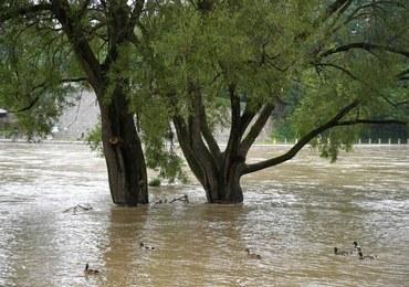 Ostrzeżenia IMGW: Burze, intensywny deszcz, a nawet grad