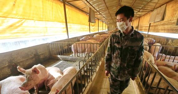 """Nowy wirus grypy wykryty w Chinach u świń stał się bardziej zaraźliwy dla ludzi. Światowa Organizacja Zdrowia (WHO) zapowiedziała, że będzie się uważnie zajmować chińskimi badaniami nad nowym wirusem. Może on bowiem potencjalnie stać się """"wirusem pandemicznym""""."""