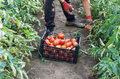 Wakacyjny rynek pracy: Najwięcej ofert pracy na wschodzie Polski, najmniej na południu