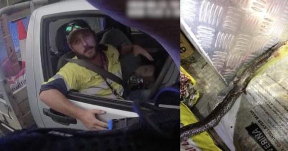 Kiedy policjant z australijskiej drogówki zatrzymał kierowcę za przekroczenie prędkości, nie spodziewał się, że w jego pojeździe znajdzie śmiertelnie jadowitego węża. Martwego, ponieważ kierowca zdołał zabić atakującego go gada, jednocześnie jadąc z prędkością 100 km/h.