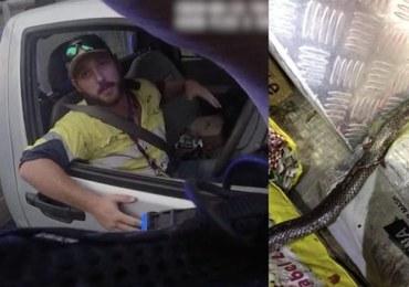 Walczył ze śmiertelnie jadowitym wężem, pędząc autostradą 100 km/h