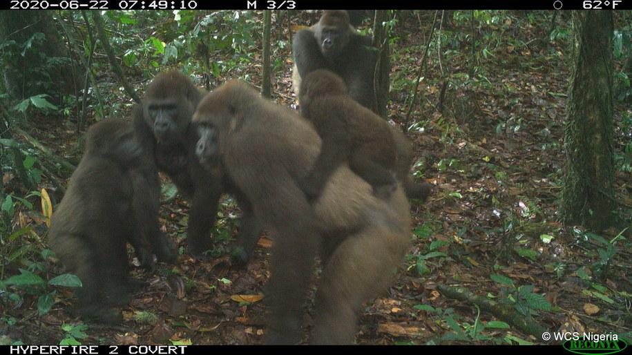 /foto. WCS NIGERIA /PAP/EPA