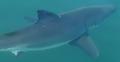 15 minut horroru: Rejs z żarłaczem białym