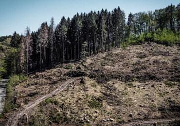 Niemieckie lasy w dramatycznym stanie. Znacząco wzrosła wycinka drzew