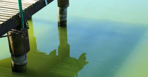 Zakwit sinic na Bałtyku. Na 17 nadmorskich plażach sanepid wprowadził zakaz kąpieli.