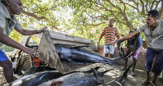 Co najmniej 13 martwych delfinów znaleziono na plaży na Mauritiusie ponad miesiąc po wycieku setek ton ropy z osiadłego na mieliźnie u wybrzeża wyspy japońskiego tankowca. Obrońcy środowiska uważają, że jest to skutek wycieku i decyzji władz o zatopieniu dziobu statku - informuje w środę BBC.