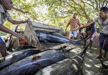 """""""To koszmar"""". Delfiny giną przez osiadły na mieliźnie tankowiec"""