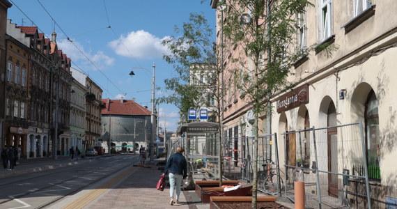 Wzdłuż ulicy Krakowskiej w stolicy Małopolski, w specjalnie osadzonych pod powierzchnią chodników donicach, posadzono 11 dorosłych, kilkunastoletnich glediczii.