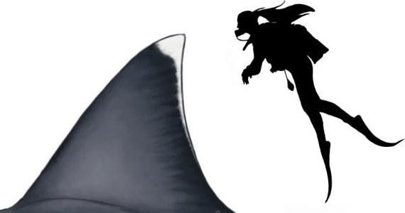 """Legendarny, prehistoryczny rekin, megalodon, największa ryba, jaka pływała w oceanach na Ziemi, była prawdopodobnie ponad dwa razy większa od największego obecnie żarłacza białego. Twierdzą tak, na łamach czasopisma """"Scientific Reports"""" naukowcy z University of Bristol i Swansea University po matematycznych symulacjach, opartych zarówno na danych dotyczących różnorodności współczesnych krewnych megalodona, jak i pozostałych po nim zębach."""
