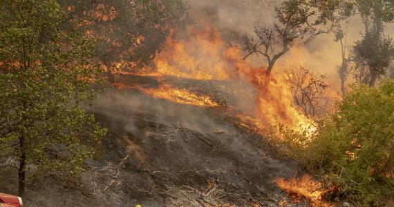 Ameryka walczy z gigantycznymi pożarami w Kalifornii. Ewakuowano już kilka tysięcy mieszkańców. Jak się okazuje, jeden z pożarów wybuchł przez nieodpowiedzialne zachowanie przyszłych rodziców.