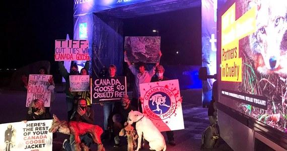 Broniąca praw zwierząt PETA zorganizowała protest podczas rozpoczętego w czwartek Toronto International Film Festival (TIFF). Demonstrujący domagali się zerwania współpracy TIFF z Canada Goose - firmą, która wykorzystuje w kurtkach futro kojotów i gęsi puch.