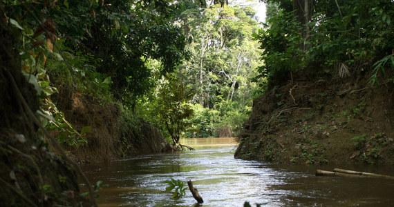 Ekspert od amazońskich plemion został zabity podczas próby podejścia do nieskontaktowanej grupy w rejonie - podają media. Rieli Franciscato był przedstawicielem rządowej brazylijskiej agencji ds. ludności rdzennej.