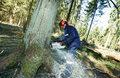 Lasy Państwowe: Spadek przychodów o 630 mln zł