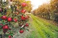 Ile pieniędzy z Unii Europejskiej na polskie rolnictwo i sadownictwo?