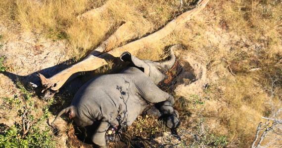 Obecne w wodopojach sinice zostały uznane przez władze Botswany za przyczynę niewyjaśnionej dotąd serii zgonów słoni w tym kraju. Od lipca zmarło tam 330 zwierząt.