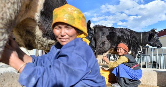 Chińskie władze kierują tybetańskich rolników do prowadzonych w wojskowym stylu centrów szkolenia, gdzie przyucza się ich do pracy w fabrykach – poinformował Reuters. Brytyjska agencja prasowa porównała działania chińskich władz do krytykowanej przez obrońców praw człowieka kampanii w Sinciangu.
