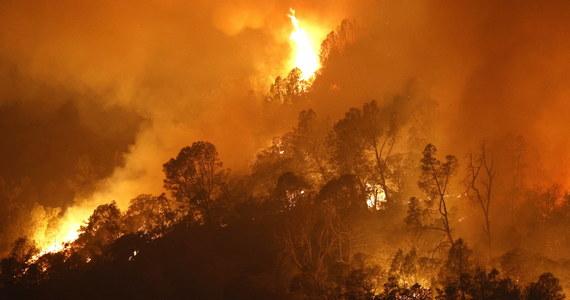 Pożary w Kalifornii strawiły ponad 1,6 mln hektarów w 2020 roku – podała kalifornijska straż pożarna. Jak podkreślono, to ponad dwukrotnie więcej niż wynosił poprzedni rekord z 2018 r.