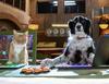 Zobacz trailer: Psy i koty 3: Łapa w łapę