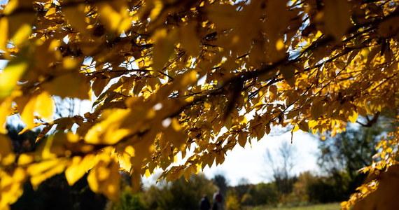 Najbliższe dni to niewątpliwie powrót wiosny. Końcówka października przyniesie ocieplenie, bo na południu kraju możemy się dziś spodziewać nawet 18 stopni. Wtorek będzie słoneczny, a deszcz spadnie tylko w niektórych regionach. Sprawdź prognozę pogody na wtorek!