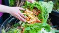 Mięso i cytrusy? Tego nie można wrzucać do kompostu