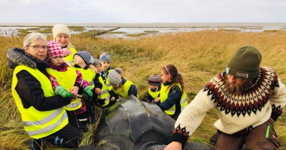 Grupa przedszkolaków podczas spaceru na plaży w Jutlandii napotkała gigantycznego żółwia. Przybyli na miejsce biolodzy stwierdzili, że to żółw skórzasty – największy na świecie żółw, żyjący w wodach Pacyfiku u wybrzeży Meksyku.