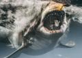 Żarłacze białe w niebezpieczeństwie! Ktoś na nie poluje i nie jest to człowiek...