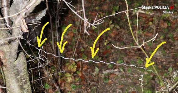 Uwaga, mieszkańcy okolic Gliwic w woj. śląskim. Ktoś zakłada wnyki w zaroślach na granicy dzielnicy Bojków i pól uprawnych. W jednej z pułapek życie stracił dziewięcioletni owczarek.