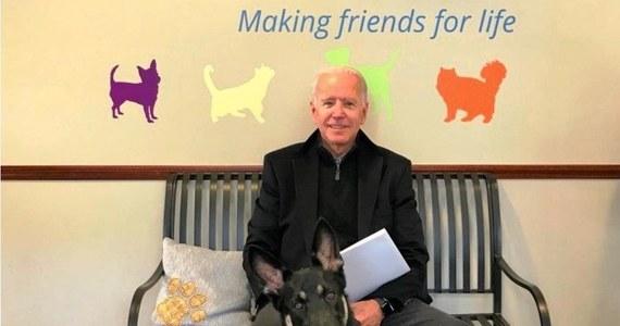 Prezydent-elekt Joe Biden w sobotę skręcił kostkę podczas zabawy z jednym ze swoich psów i został profilaktycznie zbadany przez lekarza - poinformowało w niedzielę jego biuro.