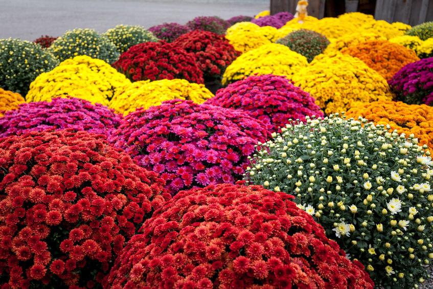 Najlepsze Kwiaty Do Wiazanek Na Cmentarz Porady W Interia Pl