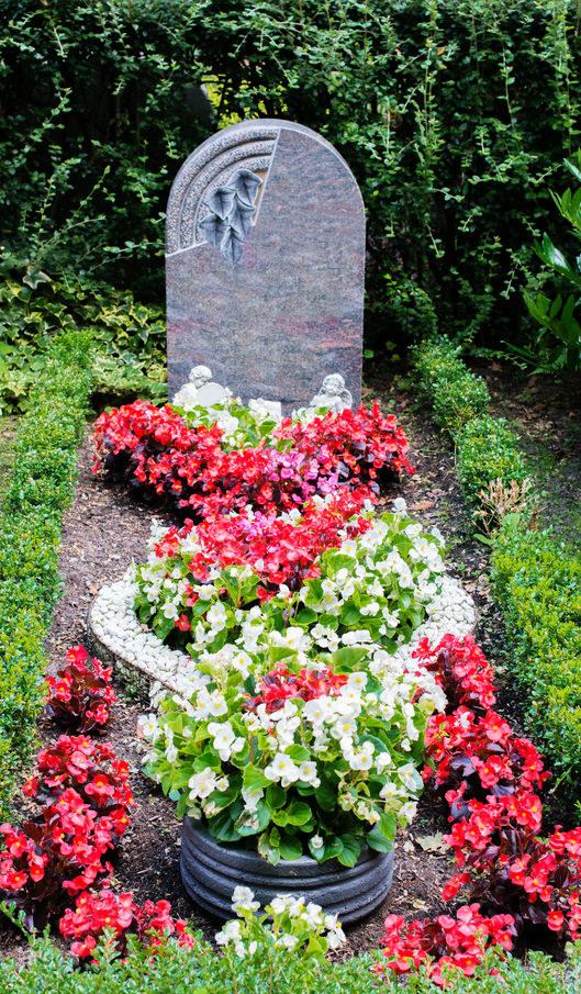 Najlepsze Rosliny Na Cmentarz Porady W Interia Pl