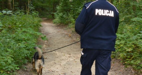 Szczęśliwie zakończyły się poszukiwania 8-letniej dziewczynki w miejscowości Biesna koło Gorlic w Małopolsce. Miejsce, w którym się znajdowała, wskazał pies. Dziecko jest wychłodzone, ale jego życiu nic nie zagraża.