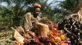 """""""Na zielono"""": Czy można ekologicznie produkować olej palmowy?"""