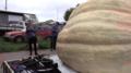 Gigantyczna dynia! Rekordzistka ważyła 867 kilogramów