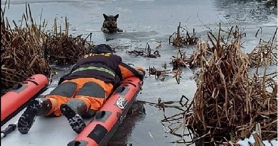 Strażacy-ochotnicy z Czaplinka ruszyli na ratunek owczarkowi niemieckiemu. Pod ciężarem psa załamał się lód. Zwierzę wpadło do jeziora w miejscowości Żerdno w zachodniopomorskiem.