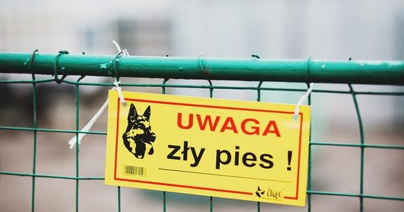 Pies dotkliwie pogryzł kobietę, zaatakował także mężczyznę, który próbował jej pomoc. Do zdarzenia doszło w sobotę wieczorem w Słupcy (wielkopolskie). Sprawę wyjaśnia policja.