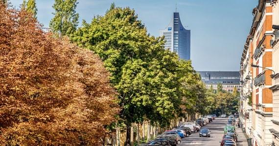 Drzewa blisko domu pomagają zmniejszyć ryzyko depresji, szczególnie w mieście - przekonują niemieccy naukowcy. W tym stwierdzeniu może i nie byłoby nic przesadnie odkrywczego, ale ciekawy jest sposób, w jaki badacze tego dowodzą. Dotychczasowe twierdzenia na temat korzystnego wpływu zieleni na nasz dobrostan opierały się na indywidualnych relacjach i odczuciach badanych. Tym razem naukowcy biorą pod uwagę... przepisywane im recepty. Recepty na antydepresanty.