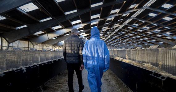 Duńska branża futrzarska otrzyma od państwa blisko 19 mld koron (ponad 2,5 mld euro) w ramach zadośćuczynienia za szkody, jakie przyniosło wybicie około 17 mln sztuk norek. Zwierzęta uśmiercono, by zapobiec potencjalnemu szerzeniu się koronawirusa - poinformowało duńskie ministerstwo finansów.