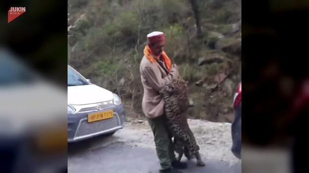 """Przedziwną sytuację zarejestrowali indyjscy kierowcy. Na jednej z dróg zobaczyli lamparta, który podszedł wyjątkowo blisko pewnego mężczyzny. Zwierzę nie atakowało, a jedynie """"zaczepiało"""" człowieka. Możliwe, że było oszołomione rozkrzyczanym tłumem."""