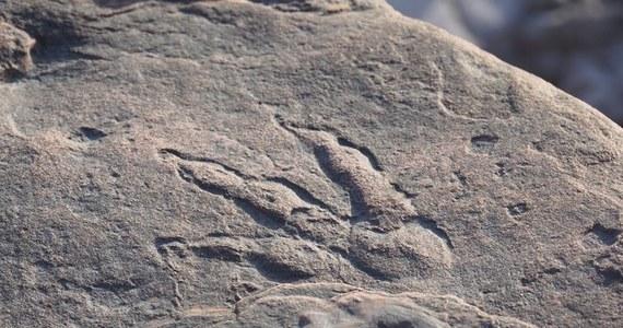 Odcisk stopy dinozaura na plaży w Walii. Dostrzegła go 4-letnia dziewczynka podczas spaceru z ojcem.