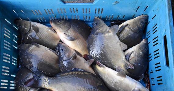 Na kary: roku oraz roku i 10 miesięcy ograniczenia wolności w postaci prac społecznych skazał łódzki sąd dwóch mężczyzn, uznając ich winnych znęcania się nad karpiami. Ryby były utrzymywane w brudnej, zakrwawionej wodzie, rzucane oraz zabijane i patroszone bez ogłuszania.