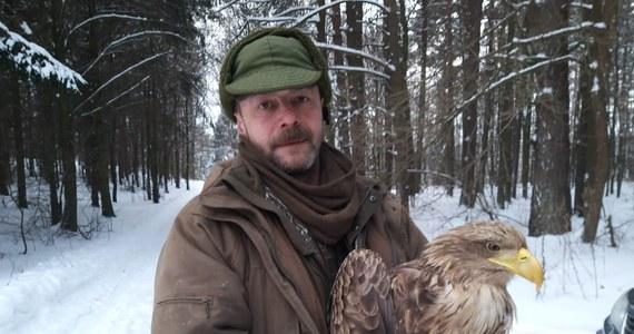 Dzięki informacji mieszkańców Spręcowa koło Olsztyna w województwie warmińsko-mazurskiem leśnikom udało się uratować bielika, który był mocno poobijany. Zwierzę było dodatkowo bardzo osłabione przez duży mróz.