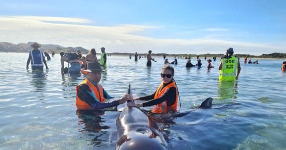 Stado 49 grindwali utknęło na plaży na północnym krańcu Wyspy Południowej w Nowej Zelandii. Dziewięć zwierząt zginęło, ratownicy próbują uratować resztę z nich.