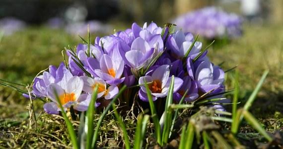 To będzie kolejny słoneczny i ciepły dzień. Termometry wskażą dziś nawet 18 stopni powyżej zera. Najwyższe temperatury nadal na zachodzie, choć wiosenna aura utrzymuje się też na Lubelszczyźnie i Podkarpaciu. Weekend zapowiada się jednak chłodny i deszczowy. Zobacz, co w pogodzie!
