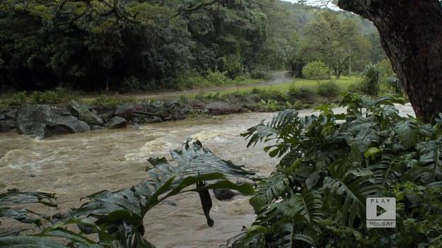 """Jednym z miejsc wartych odwiedzenia na Hawajach jest park botaniczny Waimea. Stanowi on jedno z ważniejszych przyrodniczo miejsc. Ta część Stanów Zjednoczonych słynie z tego, że można tutaj doświadczyć 10 z 14 mikroklimatów, które można spotkać na Ziemi. Łatwo odczuć to przez zmianę pogody, która występuje mimo niewielkich odległości pokonywanych na wyspie.Fragment programu """"Polacy za granicą"""", emitowanego na antenie Polsat Play."""