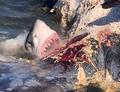 Krwawa uczta rekinów. Szał bestii uwieczniony na wideo!