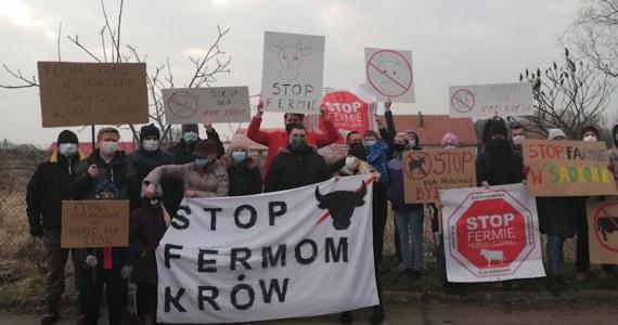 Mieszkańcy Sadkowa, niewielkiej wsi pod Kątami Wrocławskimi buntują się przeciwko stworzeniu przemysłowej fermy krów w ich miejscowości. Zawiadomili władze, media, oplakatowali miejscowość. Jednym z głównych argumentów jest troska o dobro zwierząt.