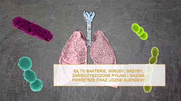 Nasze płuca są narażone na wiele szkodliwych czynników. Przede wszystkim są to bakterie, wirusy i grzyby powodujące choroby. Zanieczyszczone pyłami i gazami powietrze i liczne alergeny to kolejny problem. Na choroby płuc nie są więc narażeni tylko palacze. Zdrowy układ oddechowy lepiej sobie radzi z usuwaniem zanieczyszczeń i dlatego warto poznać naturalne sposoby na oczyszczenie płuc.