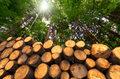 Karpackie lasy trafią pod unijny topór?